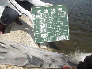 第6回 アユ放流 お知らせ(*^^)v